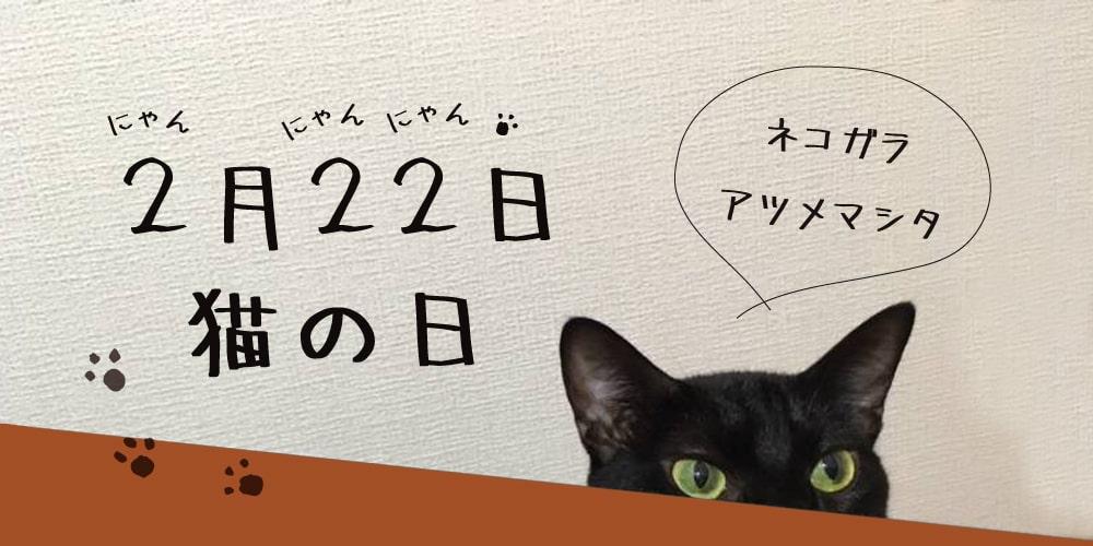 2/22 猫の日